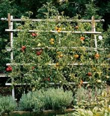 Pvc Pipe Trellis 32 Diy Tomato Trellis U0026 Cage Ideas For Healthy Tomatoes