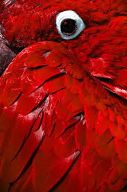 Red Colour Shades 93 Best Red Images On Pinterest Red Colour Red And Color Red