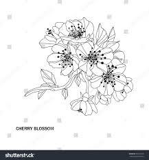 elegant hand drawn decorative cherry blossom stock vector