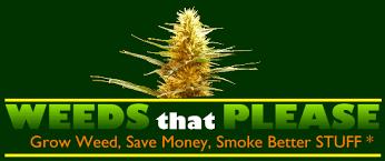 Recovering Cannabis Plants From High by Marijuana Cloning U0026 Clones How To Clone Marijuana U0026 Cannabis