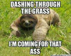 Sloth Meme Images - i truly cannot get enough of these perverted sloth memes funny