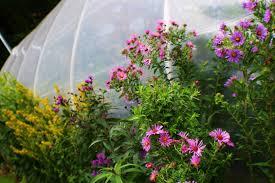 native plant nursery native plants native plant garden design wildthings rescue