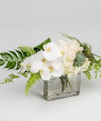 elegant orchid delivery philadelphia pa robertson u0027s flowers