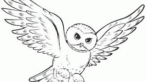 Stunning Cute Owl Coloring Pages Printable Pictures Style And Owl Coloring Ideas
