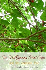 100 best fruit trees for pots grow fruit in the yard never