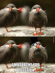 Meme Bird - feel bird memes best collection of funny feel bird pictures