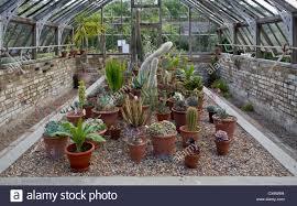 Haus Anzeige Quex Haus Und Gärten Birchington Kent England Uk Kakteen Kaktus