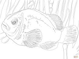 pink skunk clownfish coloring free printable coloring pages