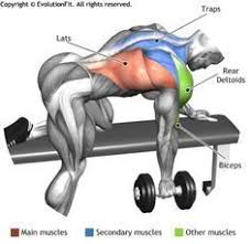 Flat Bench Dumbbell The 25 Best One Arm Dumbbell Row Ideas On Pinterest One