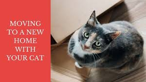 Comfort Zone With Feliway Moving Your Cat Or Kitten To Your New House Or Home Travel