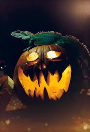 happy halloween babadook potter