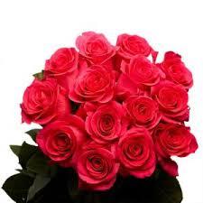 hot pink roses globalrose 2 dozen hot pink roses vars 2 dozen hot pink roses