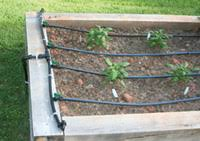 100 feet of drip irrigation for your raised bed vegetable and herb