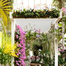 Botanical Garden Orchid Show Key West Contemporary The New York Botanical Garden S Annual