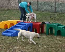 Landscaping Ideas For Backyard With Dogs Best 25 Dog Backyard Ideas On Pinterest Dog Potty Dog Bathroom