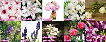 Wedding Flowers August Top 10 Wedding Flowers By Months List Of Bridal Flowers By Months