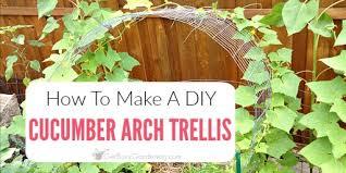 Trellis Arch Cucumber Trellis Diy How To Make A Simple Cucumber Arch Trellis