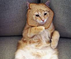 Cat In Bread Meme - paw some 20 pictures of cat breading gurl com gurl com