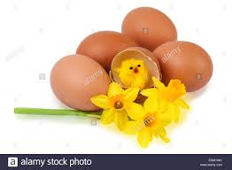 Easter Egg Decorating Funny by Easter Egg Decoration With Funny Stock Photo Royalty Free