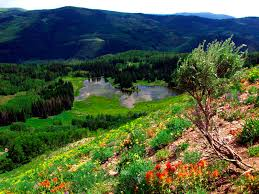 Utah forest images Uinta wasatch cache national forest heber kamas ranger district jpg