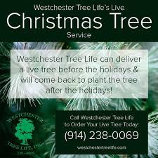 westchester tree life u0027s live christmas tree service westchester