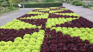 mixing it up can edibles and ornamentals get along in a designed