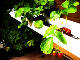 diy aquaponics 5 easiest veggies u0026 herbs to grow from seed in