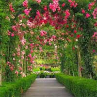 escape from the flower garden knfgame game info at wowescape com