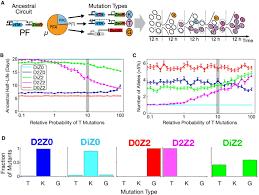 stress u2010response balance drives the evolution of a network module