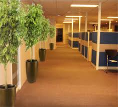 office plant rental philippines green world builders inc