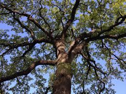 majestic tree heartglitter
