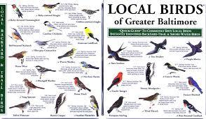 Maryland Birds images Maryland birds ornithology pinterest birds florida and jpg