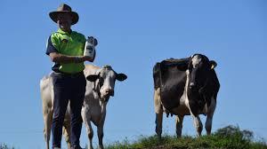 Mount Lindesay Highway Wikipedia 4real Milk Farm Fresh Milk Qld