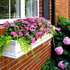 Metal Window Boxes For Plants - window boxes planter boxes hanging planters 100 window box