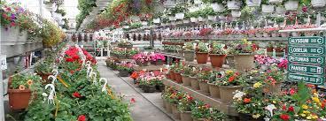 kelowna plants flowers garden supplies at the greenery garden