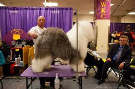 large dog grooming table best grooming tables for large dogs petful
