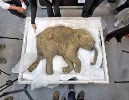 return woolly mammoth national hindu