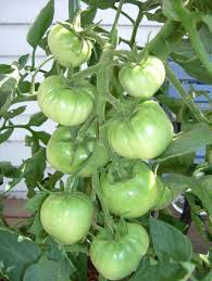 how to plant an attractive home vegetable garden install it direct