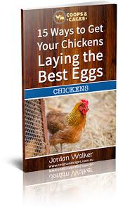 the best egg laying chicken breeds coops and cages