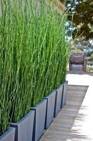 Bamboo Backyard Bamboo Garden Design U2013 Exhort Me