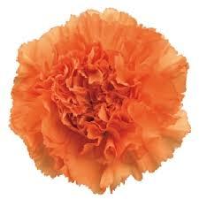 bulk flowers bulk flowers wholesale flowers wedding flowers wholesale