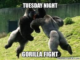 Fighting Memes - inspirational gorilla meme gorillas fighting memes kayak wallpaper