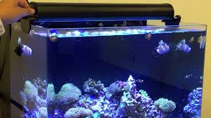 Fluval Sea Marine And Reef Led Strip Lights by Innovative Marine Skkye Light Dimmable Dualstrip Led Fixture Youtube