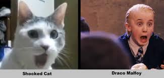 Omg Cat Meme - image 190698 omg cat know your meme