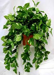 Low Light Outdoor Plants Facts About Low Light House Plants Interior Office Plants