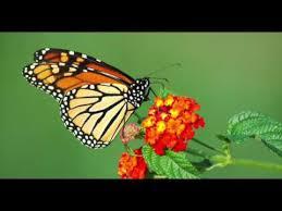 hear musgraves unreleased song butterflies