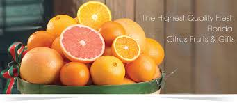 buy fruit online buy fruit fresh fruits florida orange online fruit florida gold
