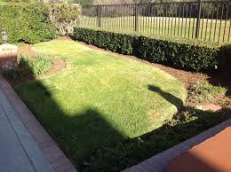 Synthetic Grass Backyard Artificial Grass Cost