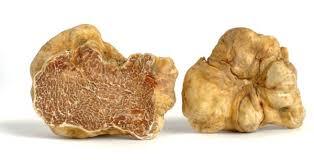 italian white truffle italian white truffle tuber magnatum due maestà