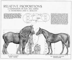 horses anatomy diagram choice image learn human anatomy image